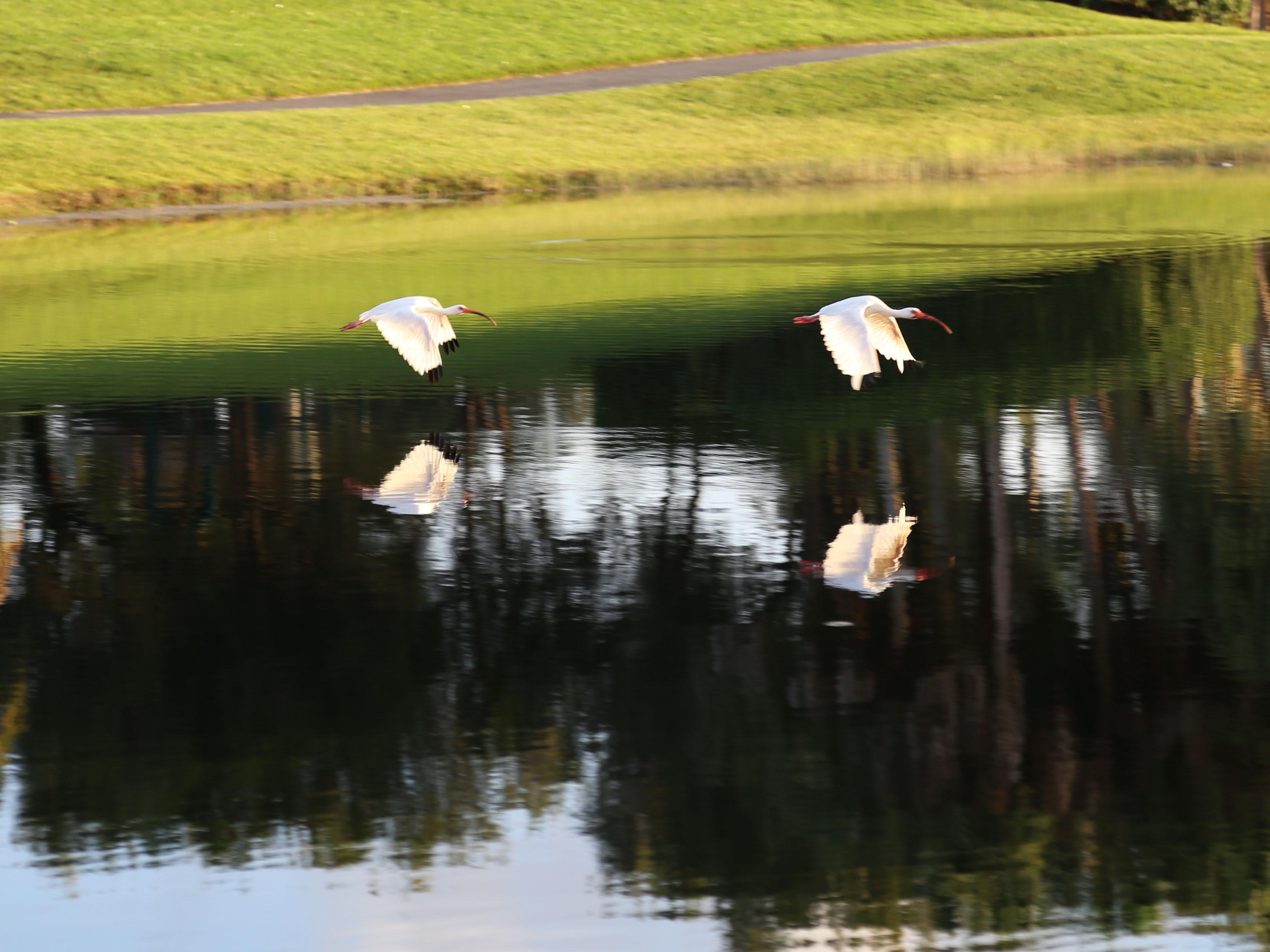 Aves en cola